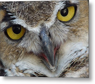 Great Horned Owl Metal Print by Janeen Wassink Searles