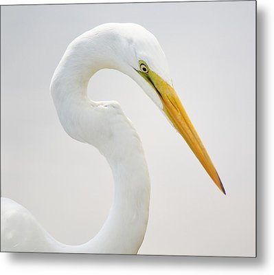 Great White Egret In Deep Thought Metal Print by Paulette Thomas