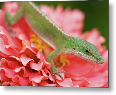 Green And Pink In Garden Metal Print by Jeff R Clow