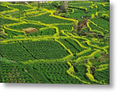 Green And Yellow Field Metal Print by MelindaChan
