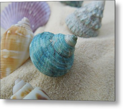 Green-blue Shell In The Sand Metal Print by Chad and Stacey Hall