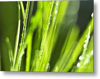 Green Dewy Grass  Metal Print by Elena Elisseeva