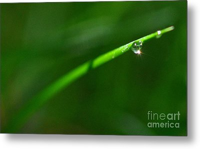 Green Drops Metal Print by Sylvie Leandre