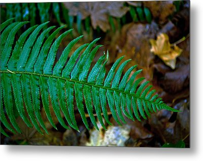 Metal Print featuring the photograph Green Fern by Tikvah's Hope
