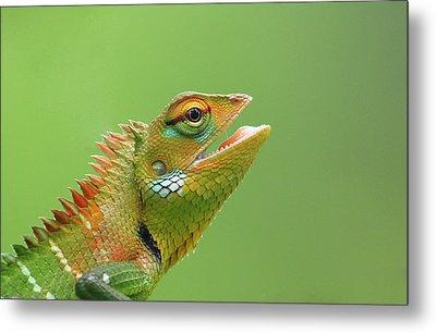 Green Forest Lizard Metal Print