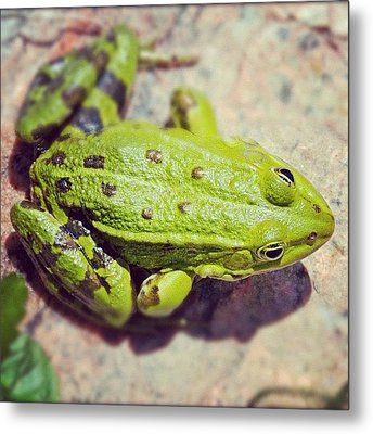 Green Frog Sitting On Stone Metal Print