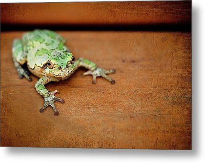 Green Frog With Gold Rimmed Black Eyes Metal Print by R. Nelson
