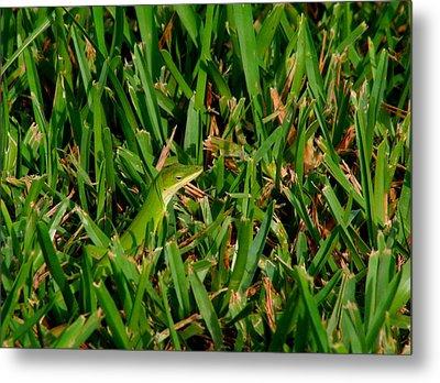 Green Grass Guise Metal Print by April Wietrecki Green
