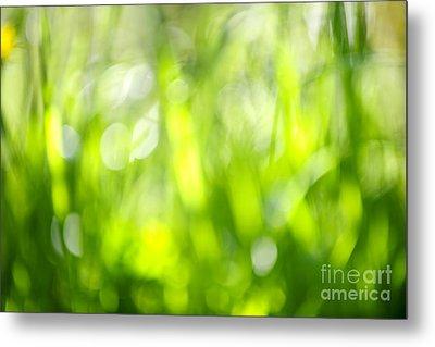 Green Grass In Sunshine Metal Print by Elena Elisseeva