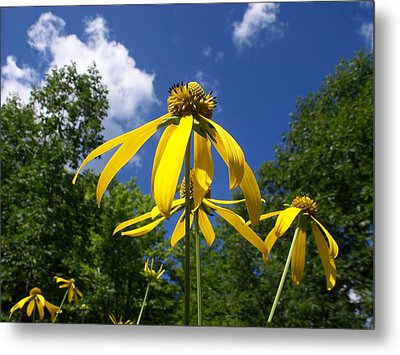 Green-headed Coneflower Metal Print
