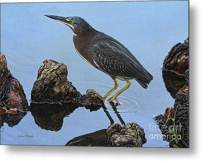 Green Heron Visiting The Pond Metal Print by Deborah Benoit
