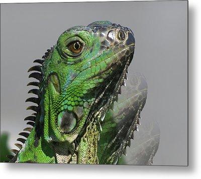 Green Iguana Triple Metal Print by Vijay Sharon Govender