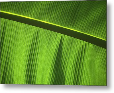 Green Leaf, Close-up Metal Print by Axiom Photographic