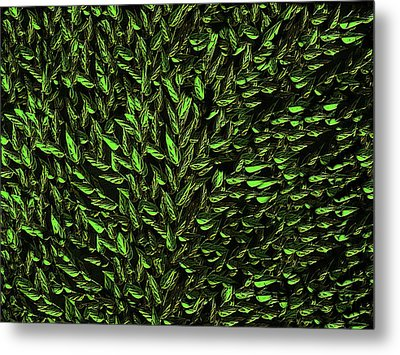 Green Leaf Metal Print by David Dehner
