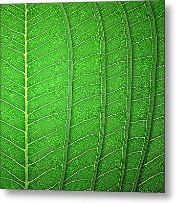 Green Leaf Texture Metal Print by Natthawut Punyosaeng