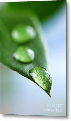 Green Leaf With Water Drops Metal Print by Elena Elisseeva