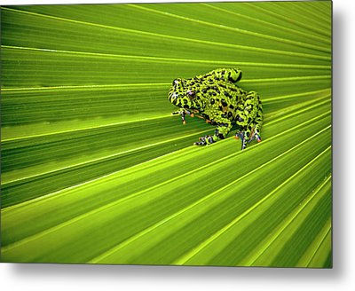 Green Lines Of Nature Metal Print by Jeff R Clow
