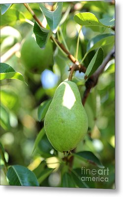 Green Pear Metal Print by Carol Groenen
