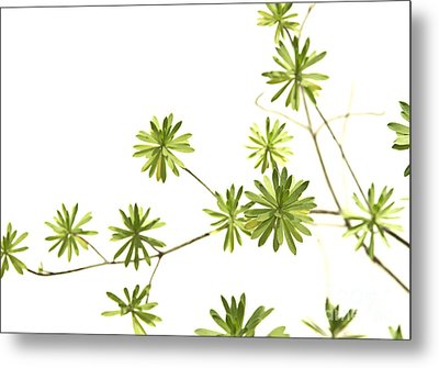 Green Plant Metal Print by Blink Images