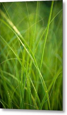 Green Prairie Grass Metal Print by Steve Gadomski
