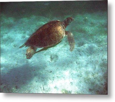 Green Sea Turtle Metal Print by David Wohlfeil