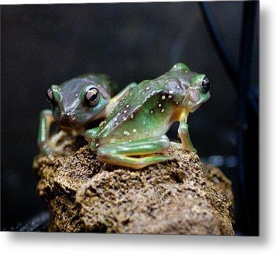 Green Tree Frogs Metal Print