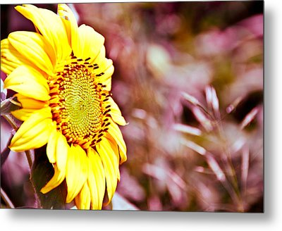 Metal Print featuring the photograph Greeting The Sun. by Cheryl Baxter