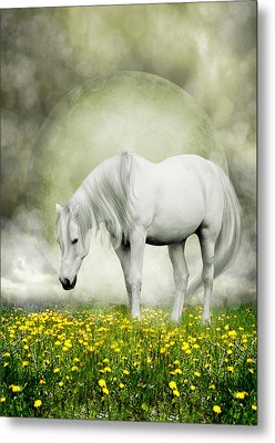 Grey Pony In Field Of Buttercups Metal Print by Ethiriel  Photography