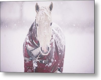 Grey Pony In Red Rug Metal Print by Sasha Bell