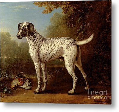 Grey Spotted Hound Metal Print by John Wootton