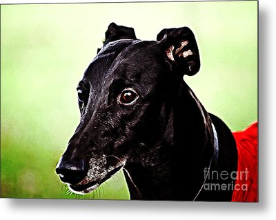 Greyhound Metal Print by The DigArtisT