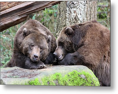 Metal Print featuring the photograph Grizzley - 0002 by S and S Photo