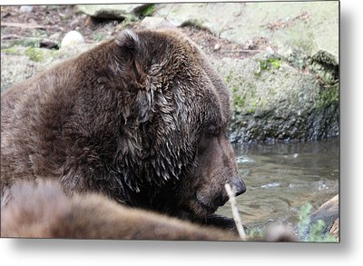 Grizzley - 0003 Metal Print