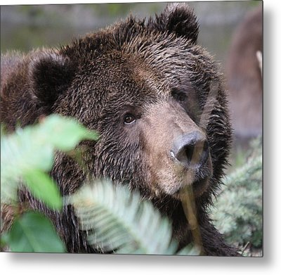 Grizzley - 0005 Metal Print
