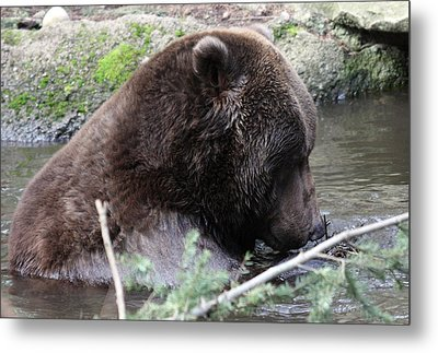 Metal Print featuring the photograph Grizzley - 0006 by S and S Photo