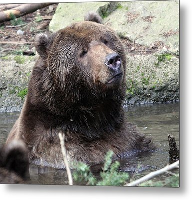 Grizzley - 0009 Metal Print