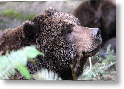 Grizzley - 0010 Metal Print