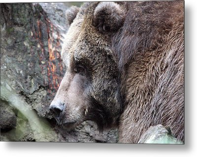 Metal Print featuring the photograph Grizzley - 0013 by S and S Photo