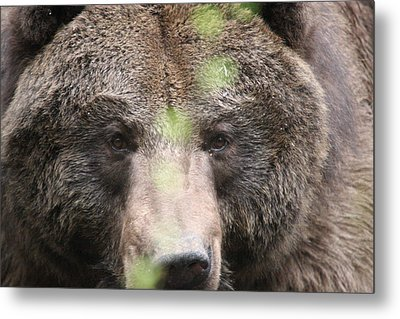 Metal Print featuring the photograph Grizzley - 0017 by S and S Photo