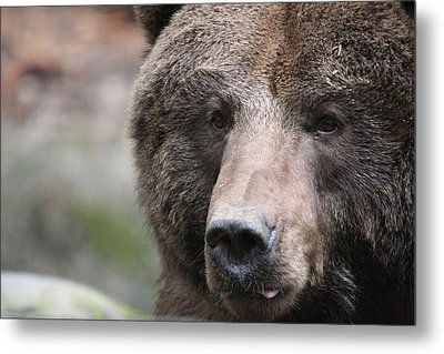 Metal Print featuring the photograph Grizzley - 0019 by S and S Photo
