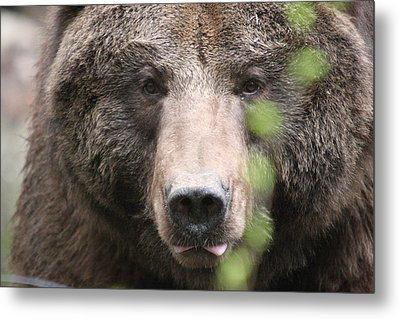 Metal Print featuring the photograph Grizzley - 0020 by S and S Photo