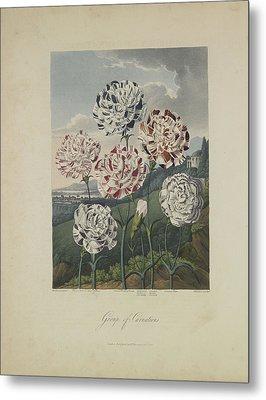 Group Of Carnations Metal Print by Robert John Thornton