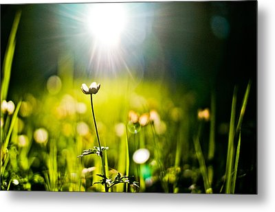 Growth Metal Print by Justin  Hill