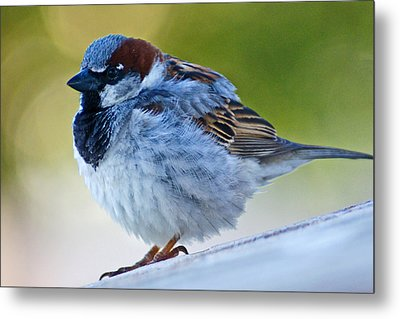 Metal Print featuring the photograph Guard Bird by Colleen Coccia
