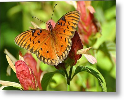 Metal Print featuring the photograph Gulf Fritillary Butterfly On Flower by Jodi Terracina