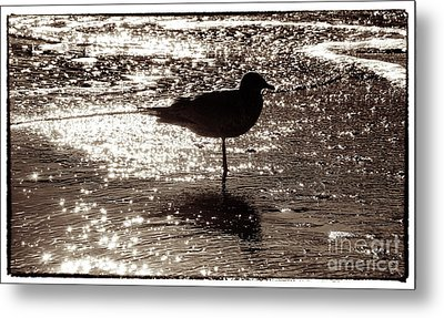 Metal Print featuring the photograph Gull In Silver Tidal Pool by Jim Moore