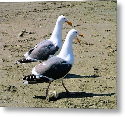 Gull Talk Metal Print by Wendy McKennon