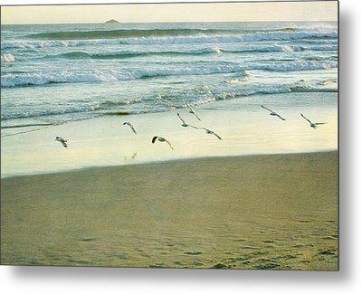 Gulls Flying Metal Print by Jill Ferry