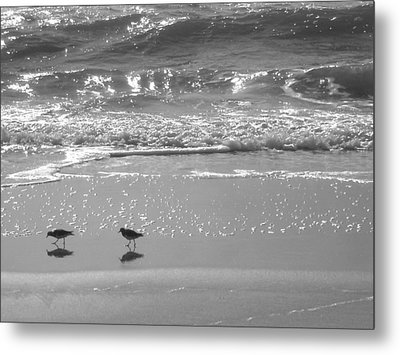 Gulls Taking A Walk Metal Print by Cindy Lee Longhini