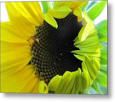 Metal Print featuring the photograph Half-bloom Beauty by Tina M Wenger